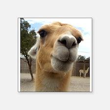 """Llama Square Sticker 3"""" x 3"""""""