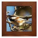 Chickadee in Tree Framed Tile
