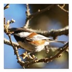 Chickadee in Tree Square Car Magnet 3
