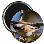 Chickadee in Tree Magnet