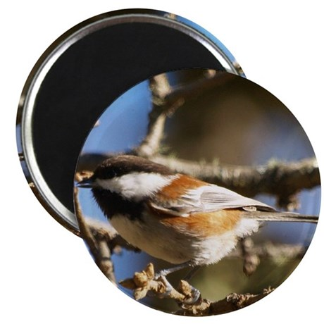 Chickadee in Tree Magnet