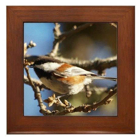 Chickadee in Tree Framed Tile
