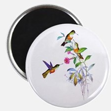 Hummingbirds Magnet