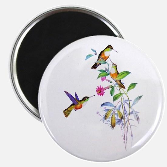 Hummingbirds Magnet