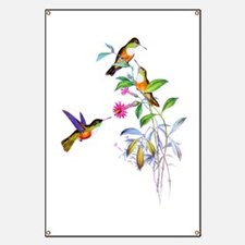 Hummingbirds Banner