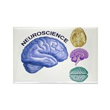 Neuroscience in All Directions Rectangle Magnet