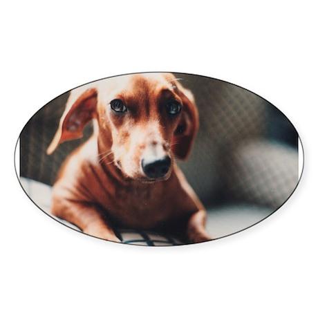 Mishka Dog iPhone 5 Case