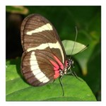 Butterfly pic.png Square Car Magnet 3