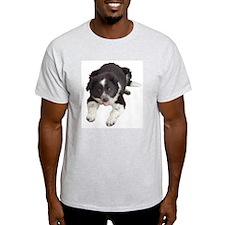 English Shepherd / Border Collie Ash Grey T-Shirt