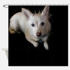 Alfie15.jpg Shower Curtain