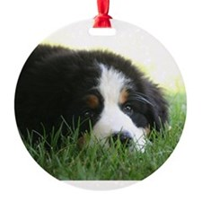 Bernese Puppy Ornament