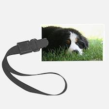 Bernese Puppy Luggage Tag