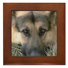 German Shepherd Face (photo) Framed Tile