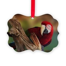 Greenwing Macaw Ornament