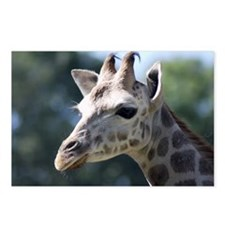 Young Rothschild Giraffe Postcards (Package of 8)