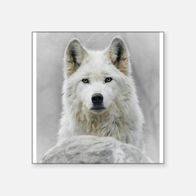"White Wolf Square Sticker 3"" x 3"""