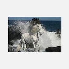 Ocean Stallion Rectangle Magnet