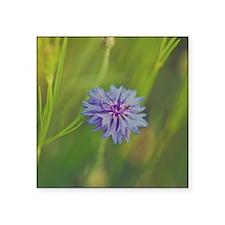 """Purple wildflower. Square Sticker 3"""" x 3"""""""