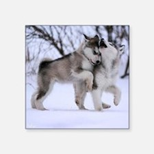 """Wolves Playing Square Sticker 3"""" x 3"""""""