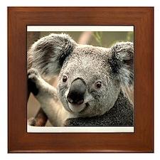 Koala Framed Tile