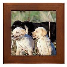 Labrador Puppies Framed Tile