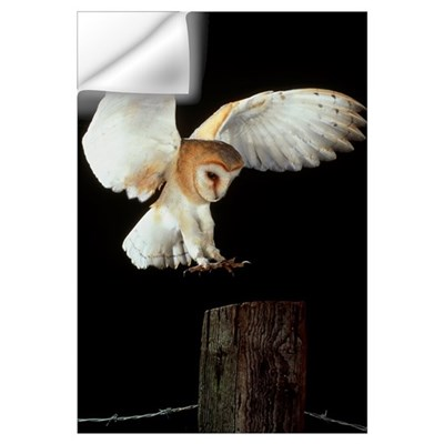 Barn owl Wall Decal