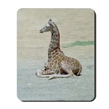 Young Giraffe at Rest Mousepad