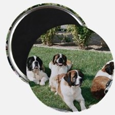 Lounging St. Bernards Magnet