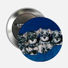 Schnauzer Puppies Button