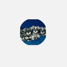 Schnauzer Puppies Mini Button