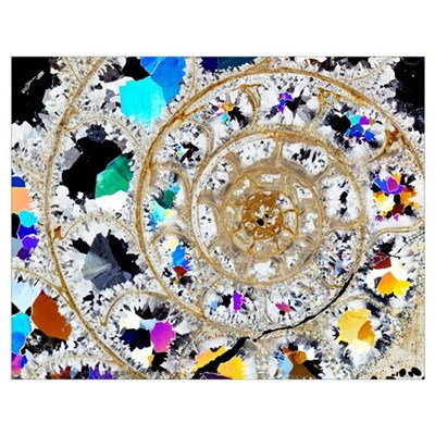 Ammonite fossil, thin section Poster