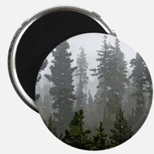 Misty pines Magnet