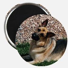 Quizzical German Shepherd Dog Magnet