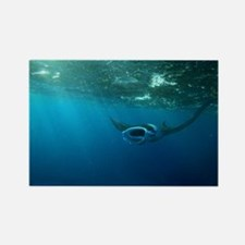 Manta Ray Swims in the water Rectangle Magnet