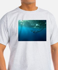 Manta Ray Swims in the water T-Shirt