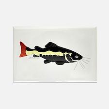 Redtailed Catfish (Audreys Amazon River) Rectangle