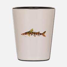 Tiger Shovelnose Catfish (Audreys Amazon River) Sh