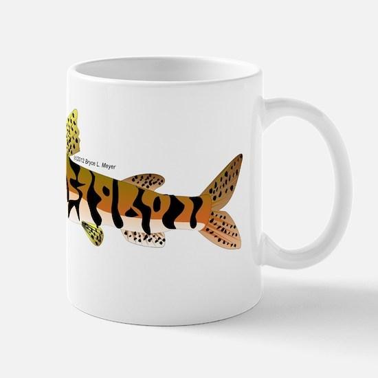 Tiger Shovelnose Catfish (Audreys Amazon River) Mu