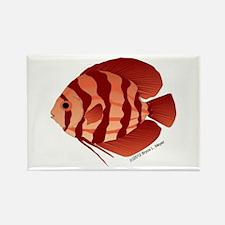 Discusfish (Discus) fish Rectangle Magnet