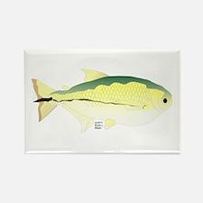 Elongate Hatchetfish Amazon River fish Rectangle M