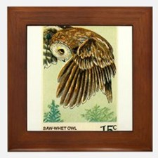 1978 United States Saw whet Owl Postage Stamp Fram