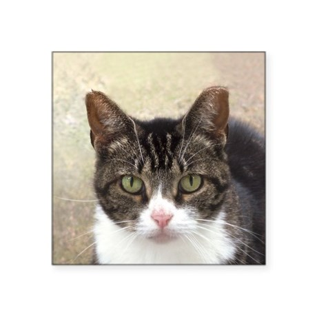 """Tabby Cat Stare with Green Eyes Square Sticker 3"""""""
