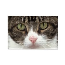 Tabby Cat Stare with Green Eyes Rectangle Magnet
