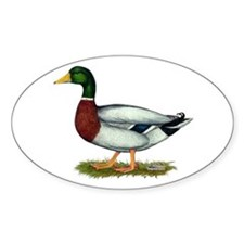 Mallard Duck Drake Decal