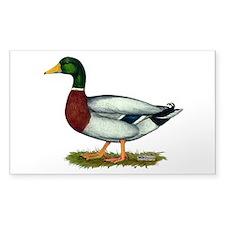 Mallard Duck Drake Bumper Stickers