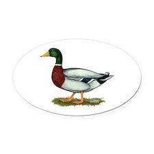 Mallard Duck Drake Oval Car Magnet