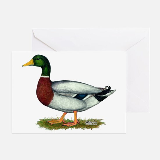 Mallard Duck Drake Greeting Card