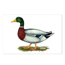 Mallard Duck Drake Postcards (Package of 8)