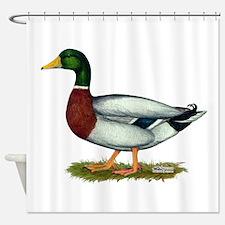Mallard Duck Drake Shower Curtain