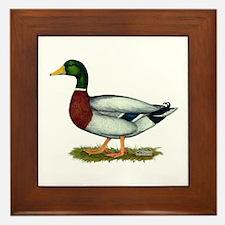 Mallard Duck Drake Framed Tile